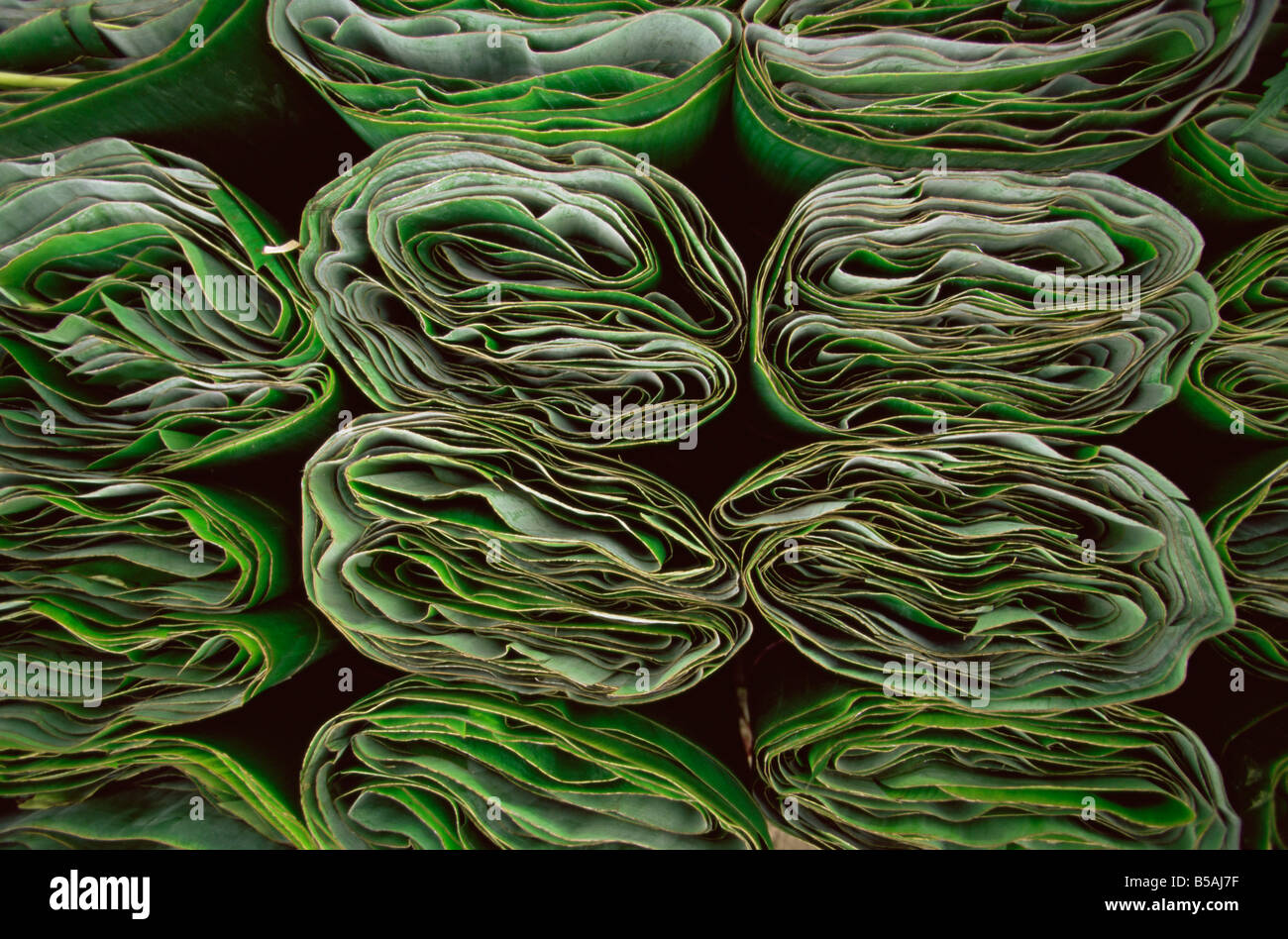 Tamale wrappers, Mexico, North America - Stock Image