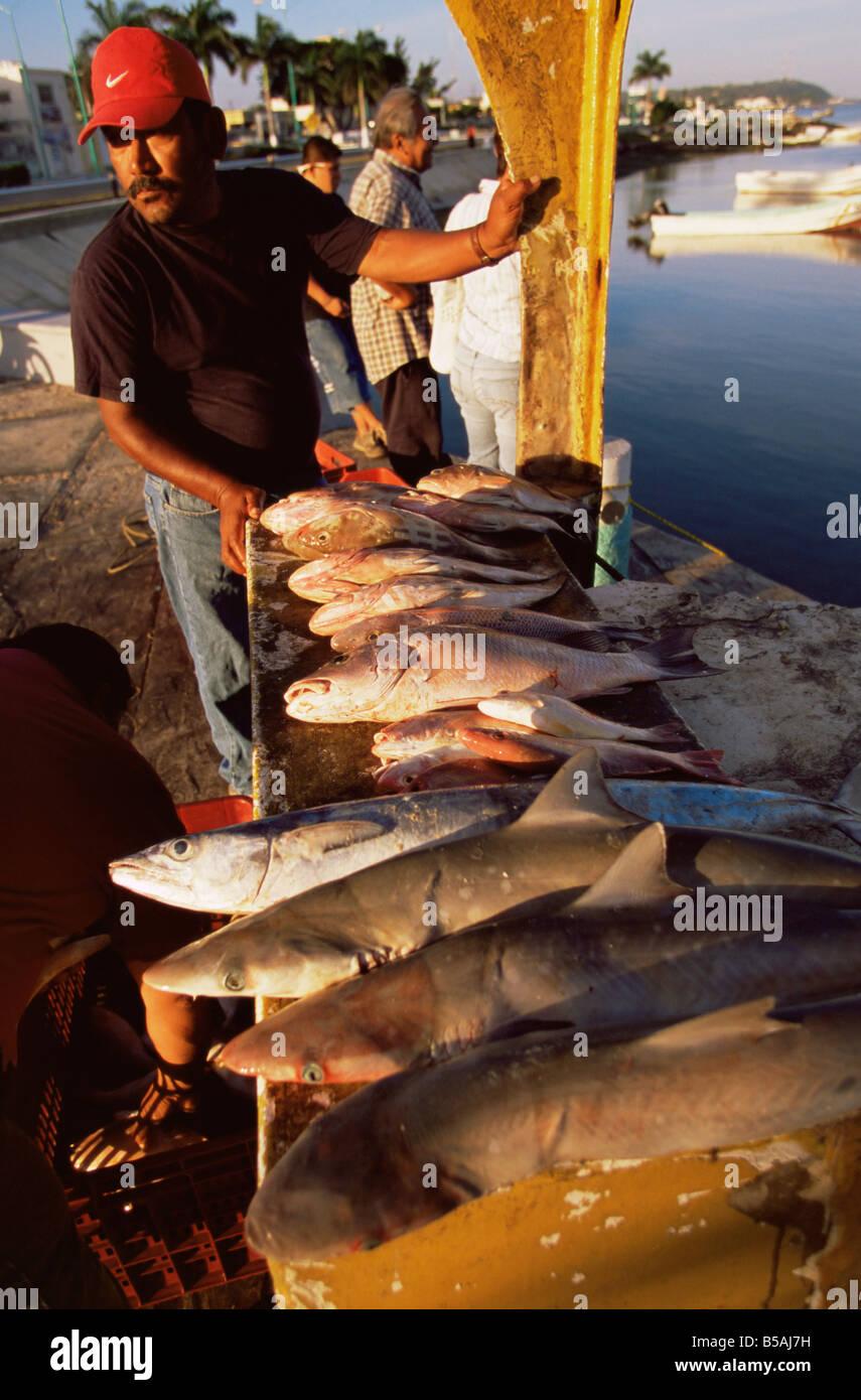 Fish market, Campeche, Mexico, North America Stock Photo