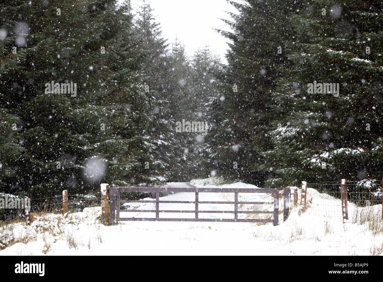 gate entrance to Slieveanorra forest county antrim northern ireland uk - Stock Image