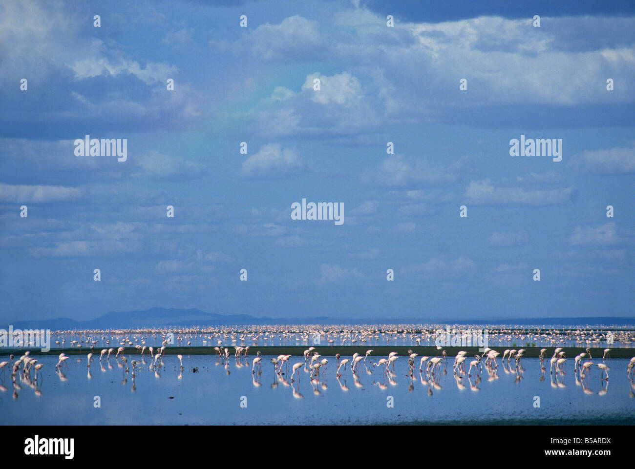 Lake Natron, Eastern Rift Valley, Tanzania, East Africa, Africa Stock Photo