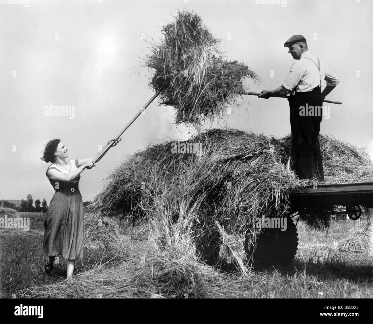 Hay making in the English countryside during the summer. August 1954 - Stock Image