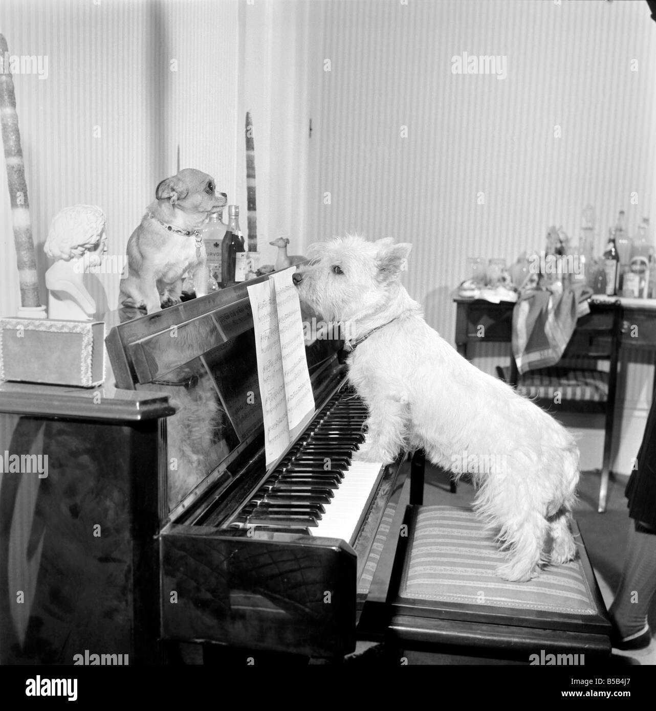 1960s Dog Stock Photos & 1960s Dog Stock Images - Alamy