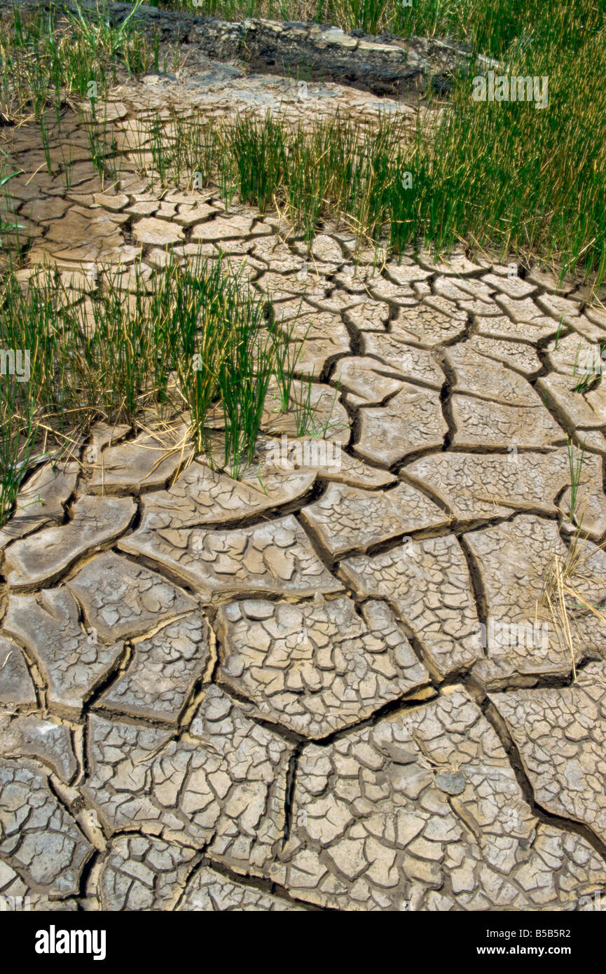 Dry ground near the Pitch Lake Trinidad West Indies Caribbean Central America - Stock Image