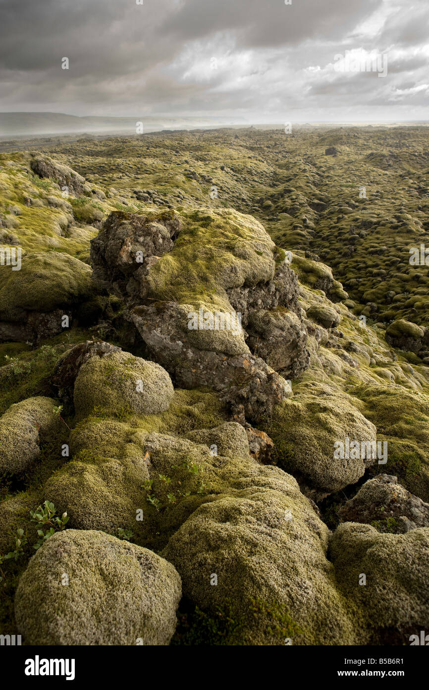 Ancient Lava Field Covered with Moss Southern Coast of Iceland - Stock Image