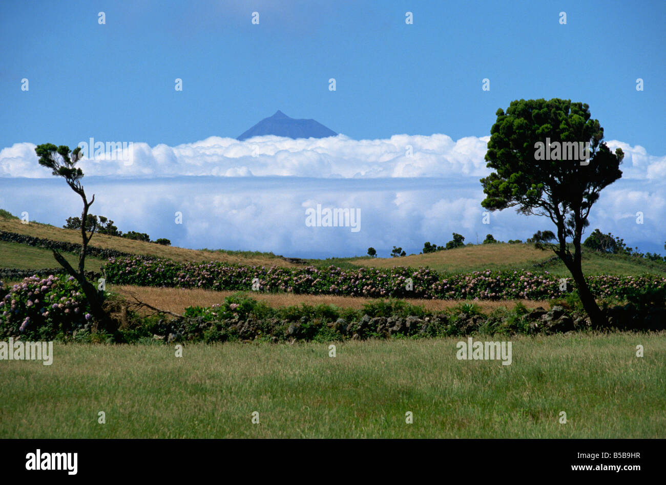 Pico projects above clouds Sao Jorge Azores Portugal Europe - Stock Image