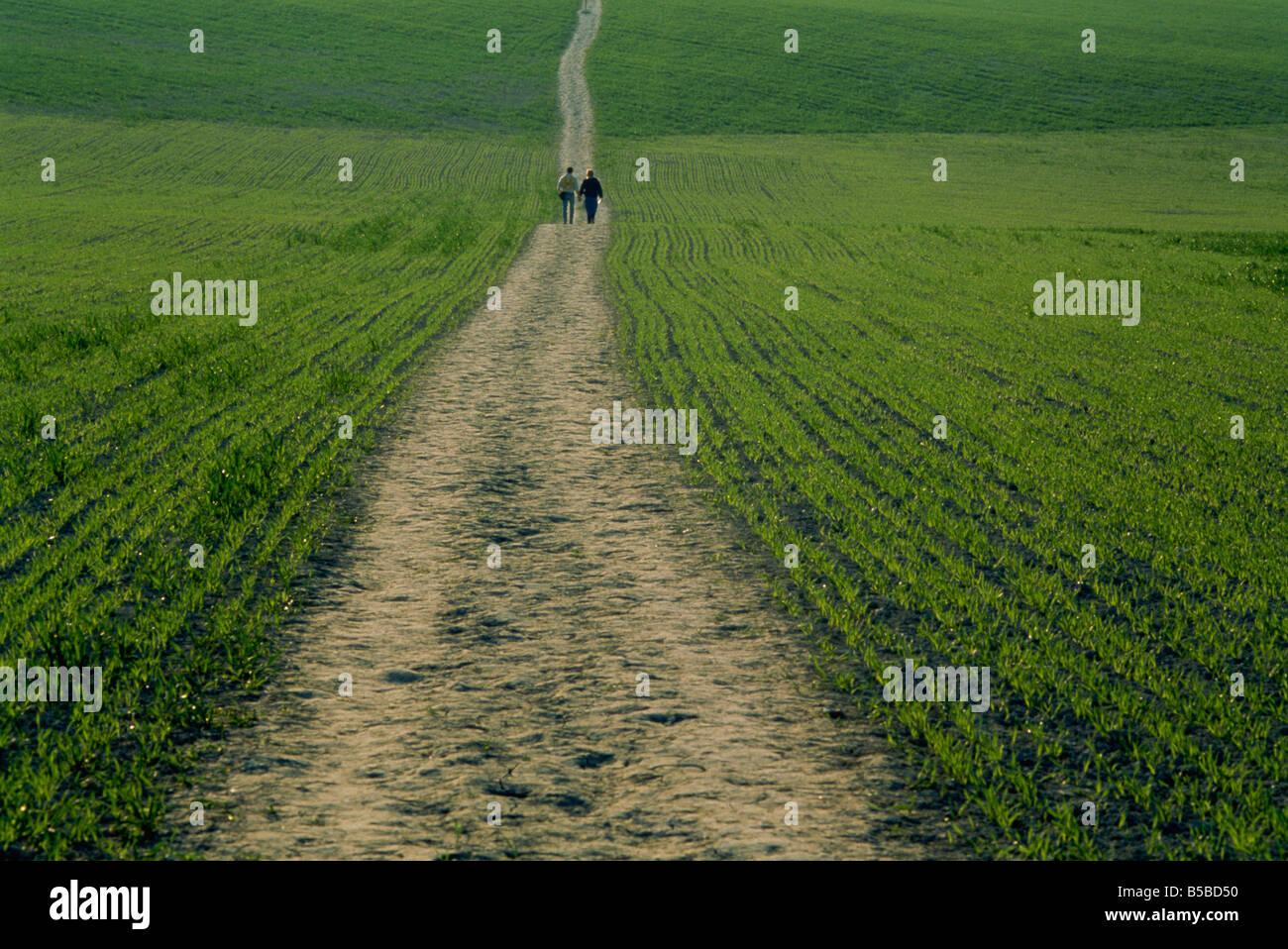 The Ridgeway Path Ellesborough Chilterns Buckinghamshire England United Kingdom Europe - Stock Image