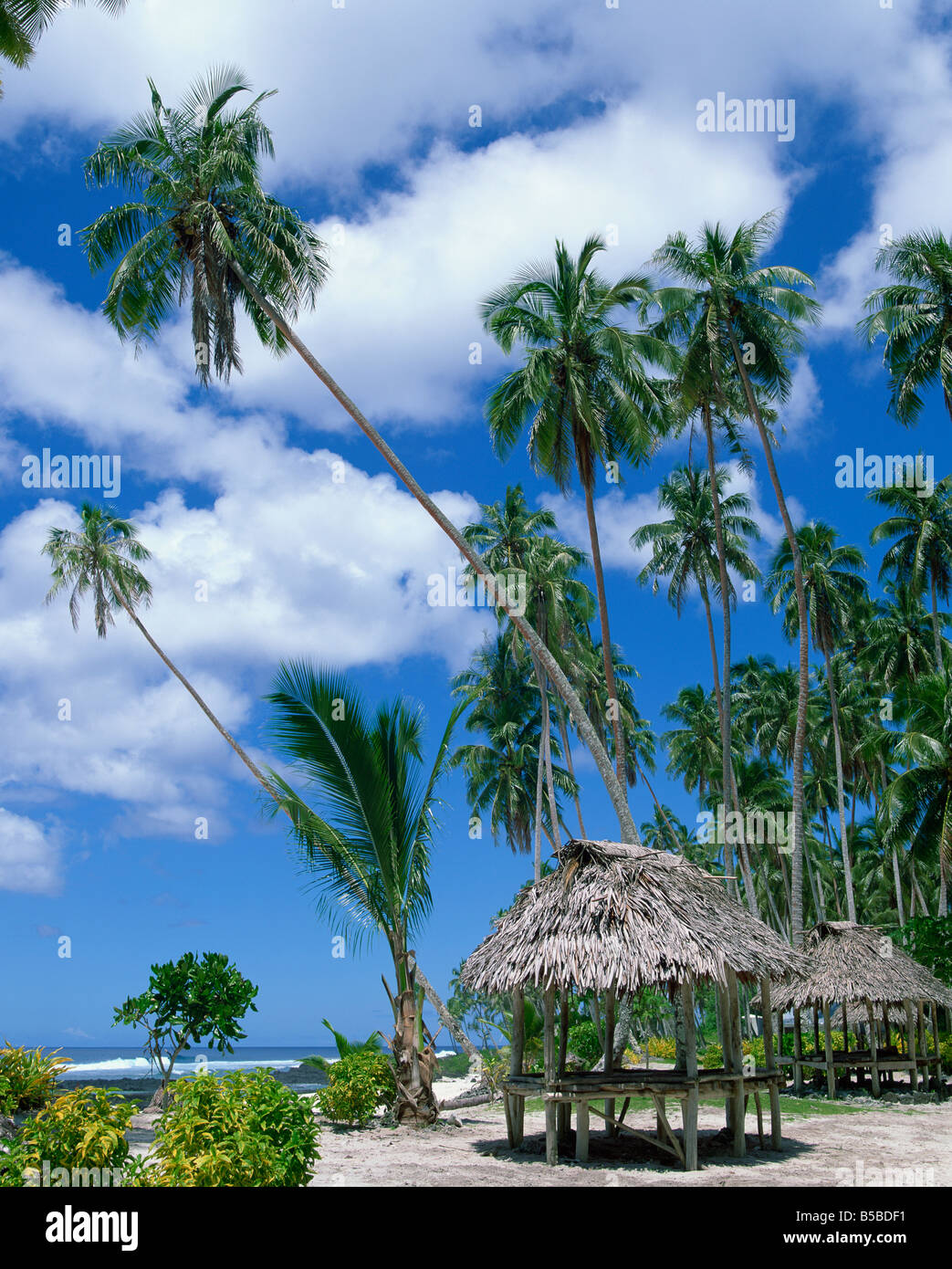 Palm trees and thatched shelters on the beach at Lefaga Western Samoa Pacific Islands Pacific - Stock Image