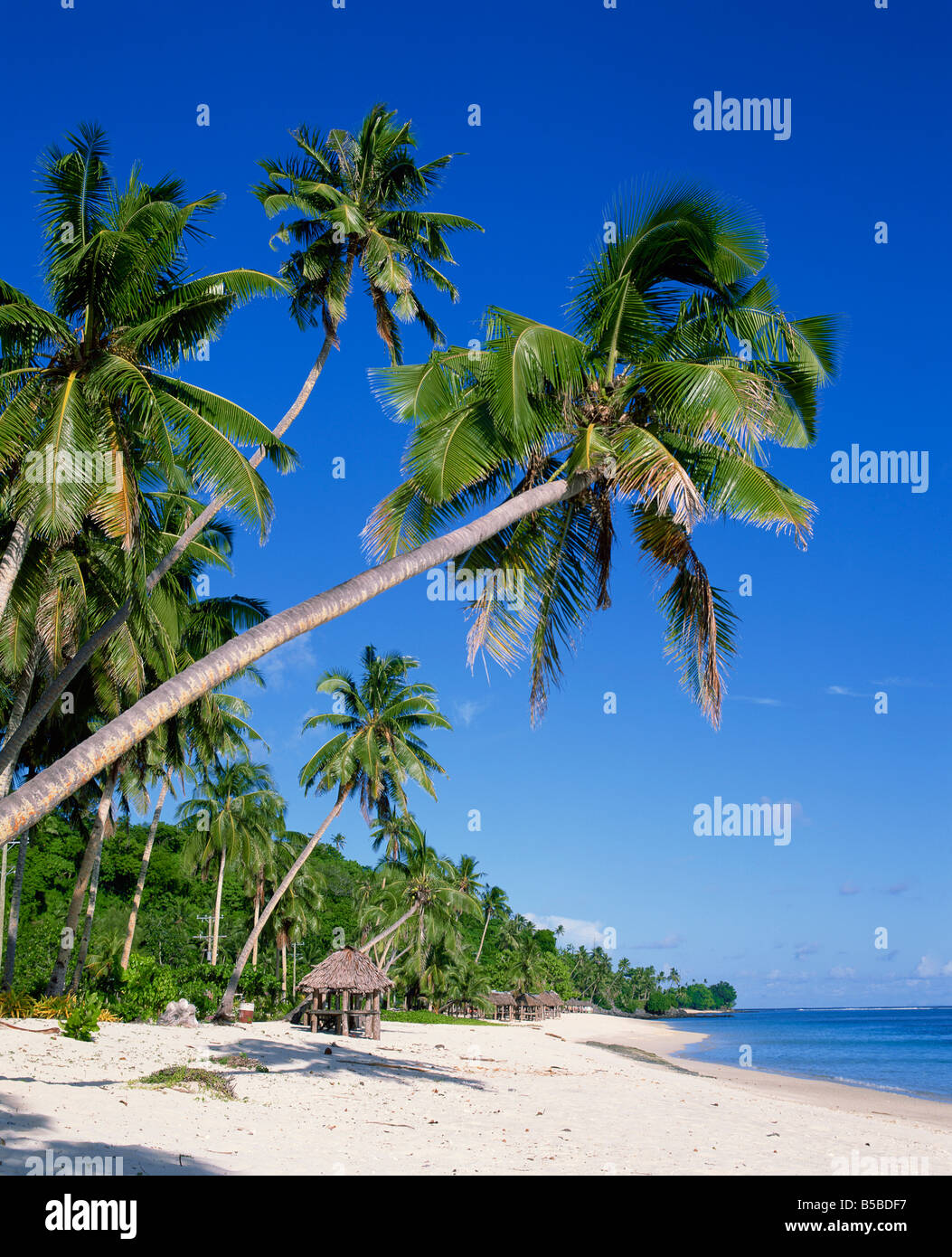 Palm trees and tropical beach at Lalamanu near Vavau Western Samoa Pacific Islands Pacific - Stock Image