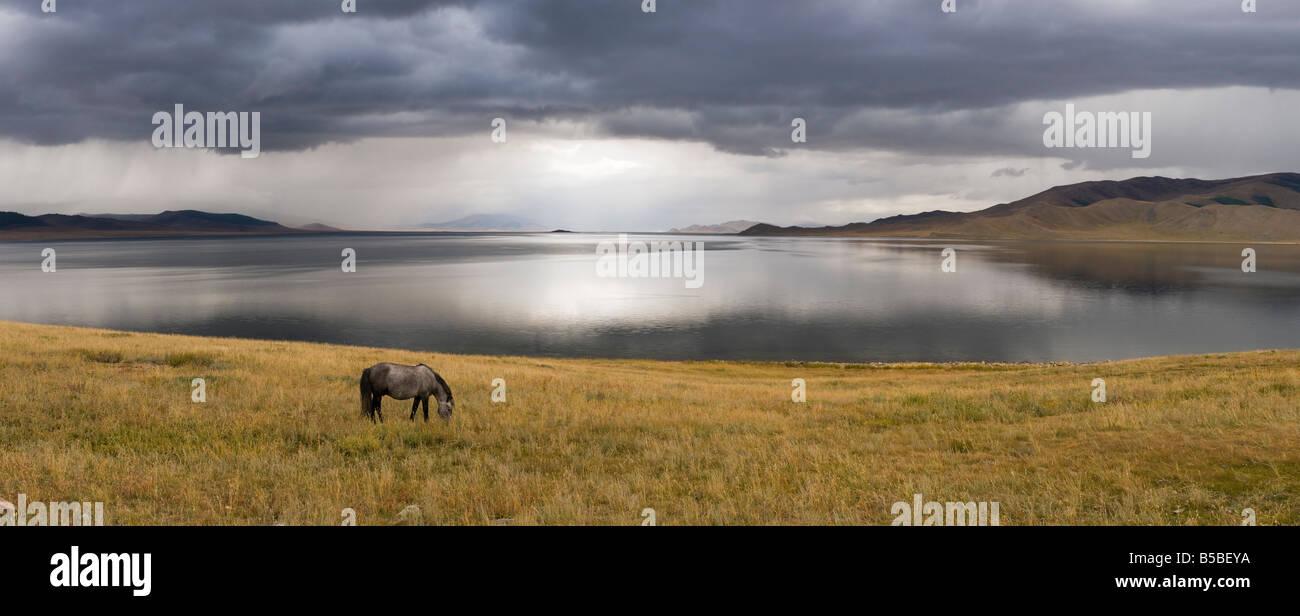 Grey Horse grazing at White Lake, Mongolia. Photo taken shortly before a thunderstorm. - Stock Image