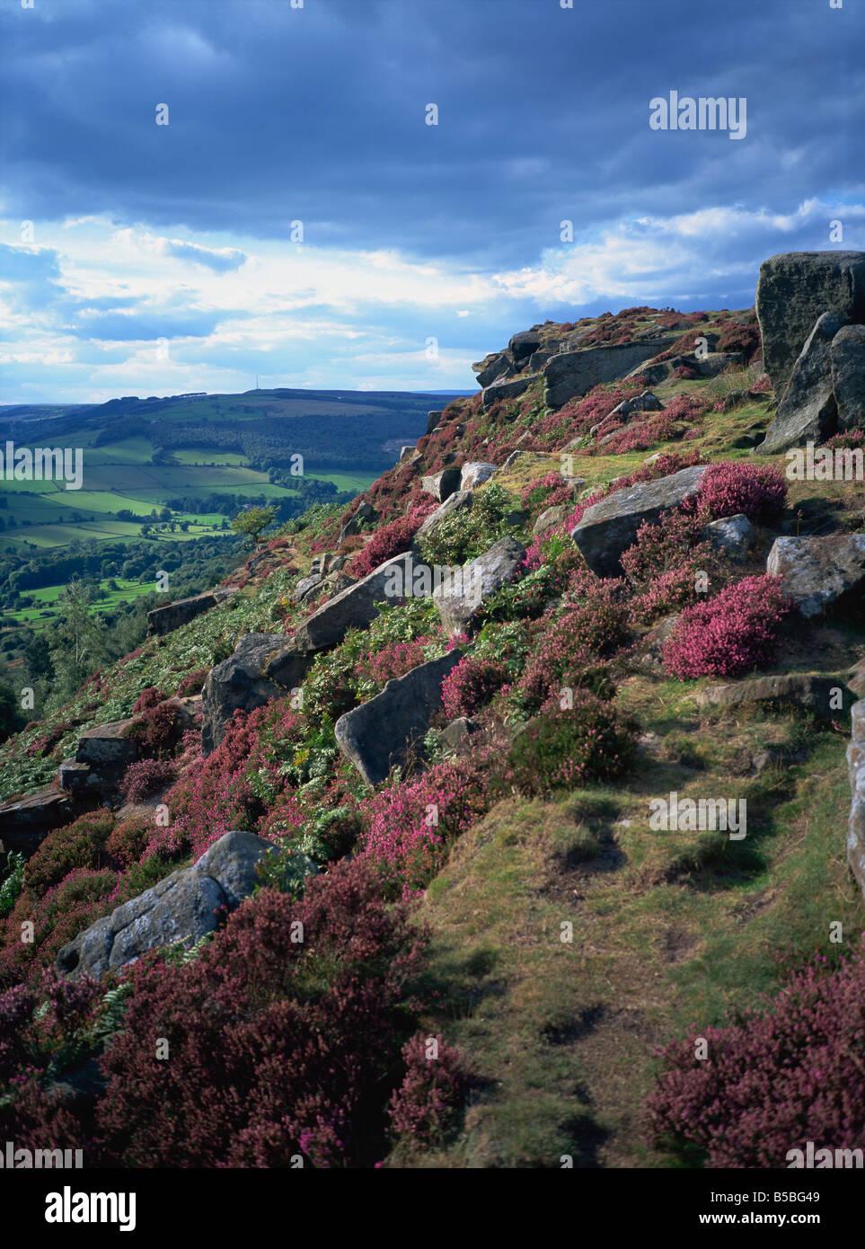 Heather and rocky terrain, Froggatt Edge, Derbyshire, England, Europe - Stock Image