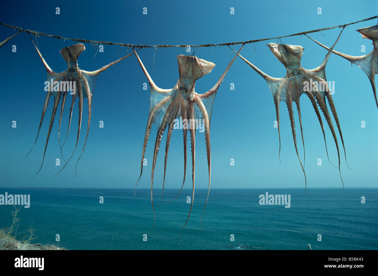 Octopi hung out to dry, Nerja, Costa del Sol, Andalucia, Spain, Europe - Stock Image