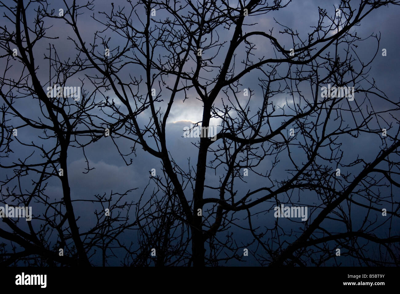 Silhouette of a leafless tree against a dark sky, winter, Italy. - Stock Image