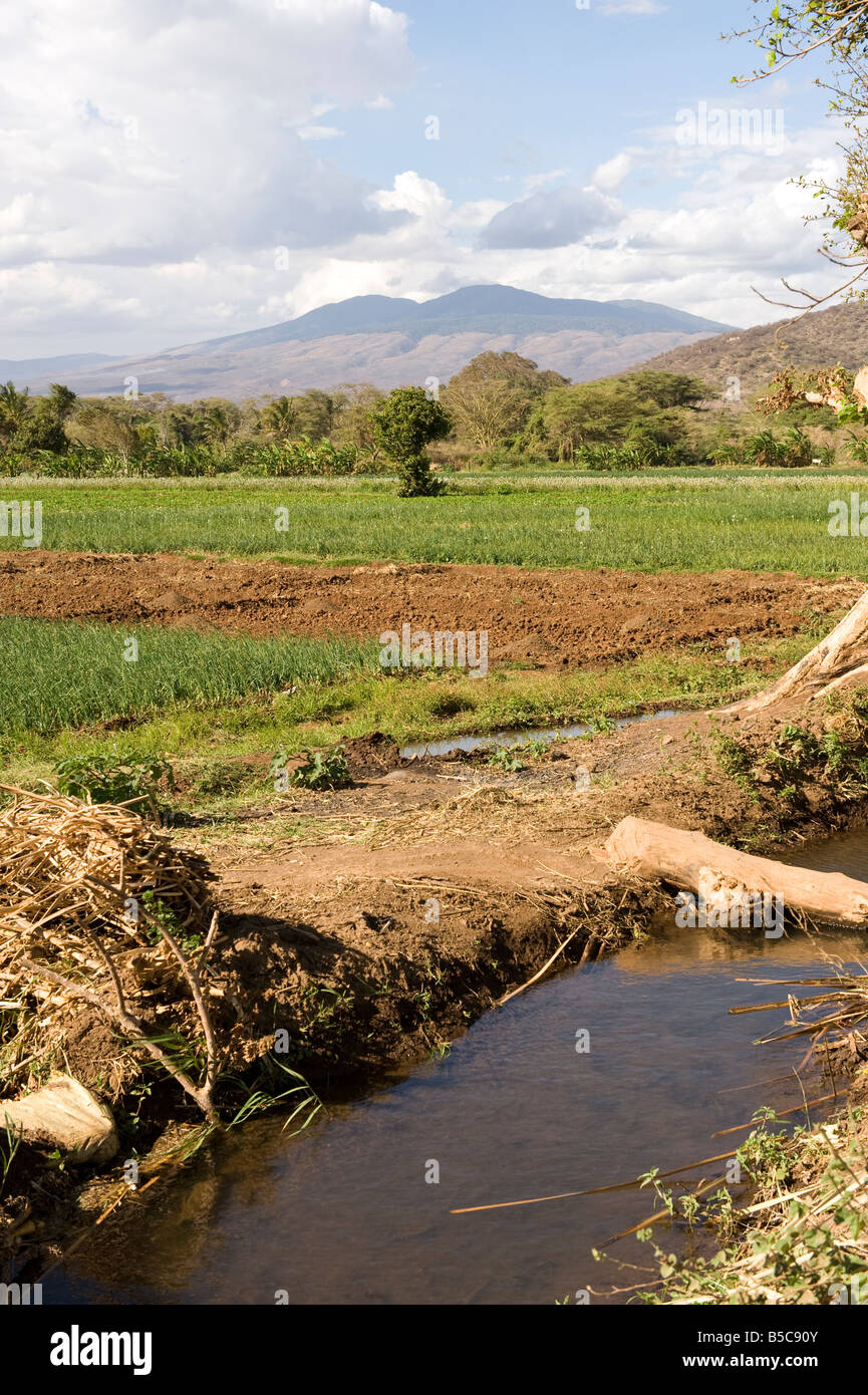 Onions are an important cash crop around Mangola Lake Eyasi.In Tanzania 80% of all onions are grown around Lake - Stock Image