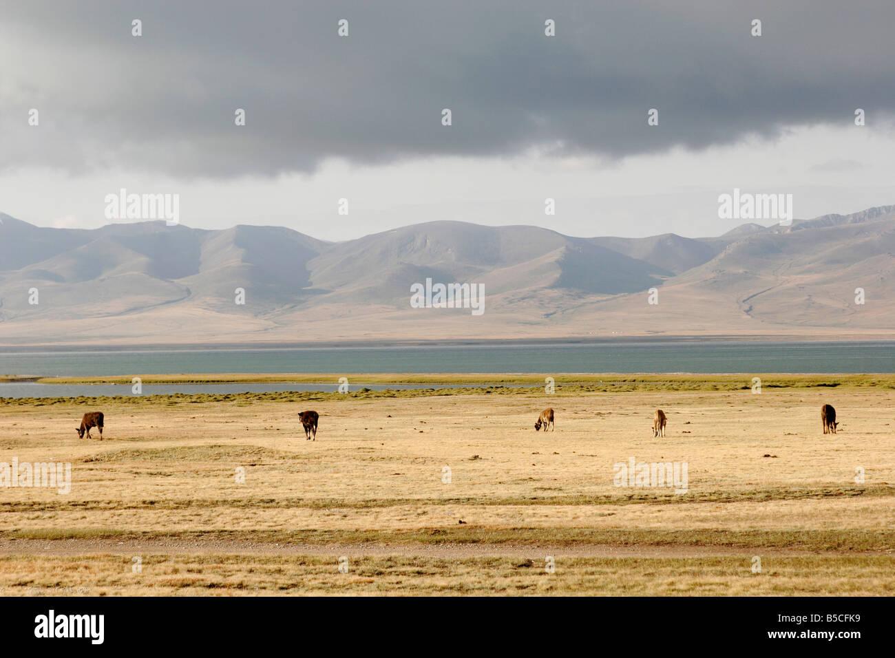 Pastures on lake Song-Kol, Tien Shan mountain, Kyrgyzstan, Central Asia - Stock Image