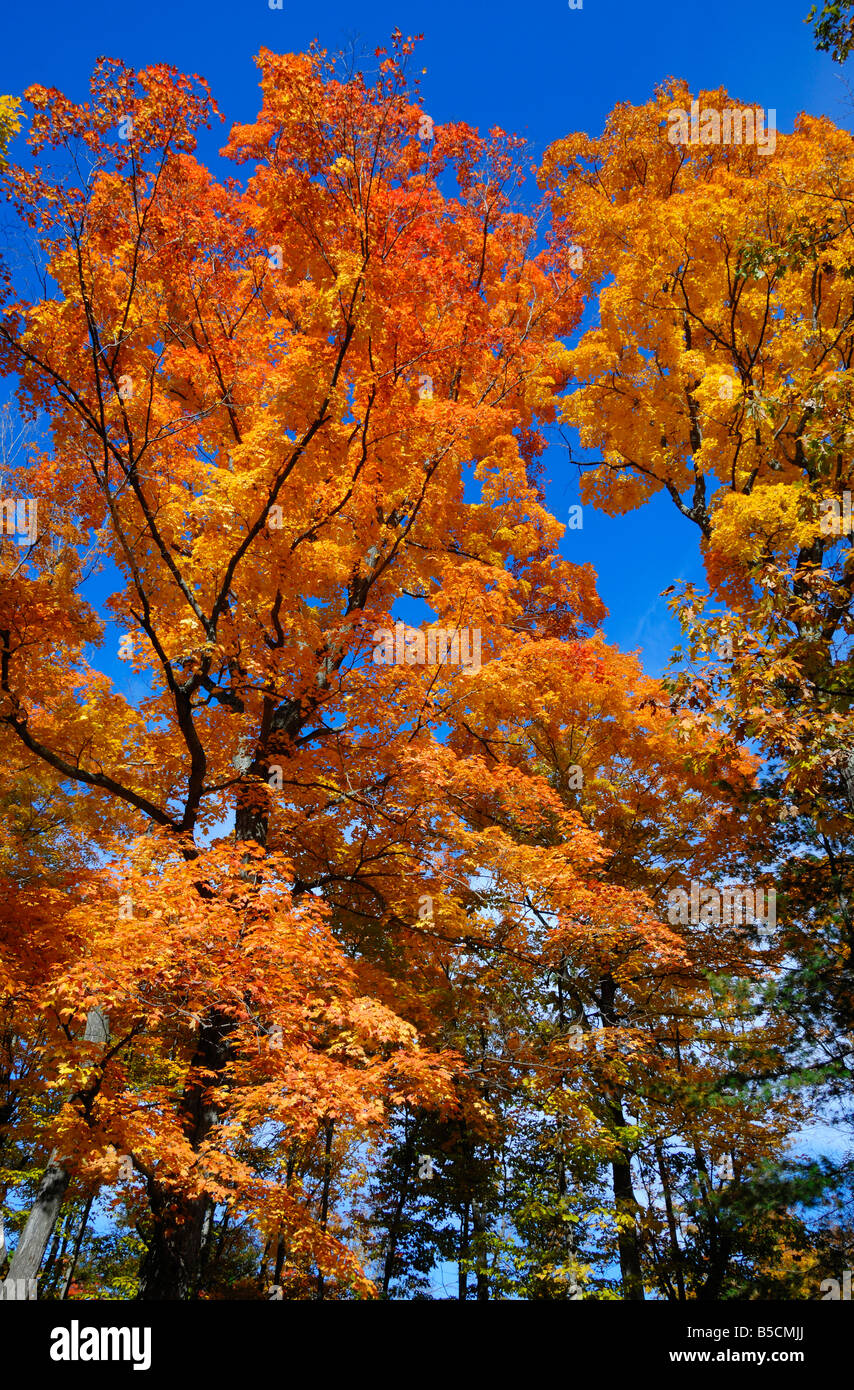 Fall colours near Omemee in Ontario, Canada - Stock Image
