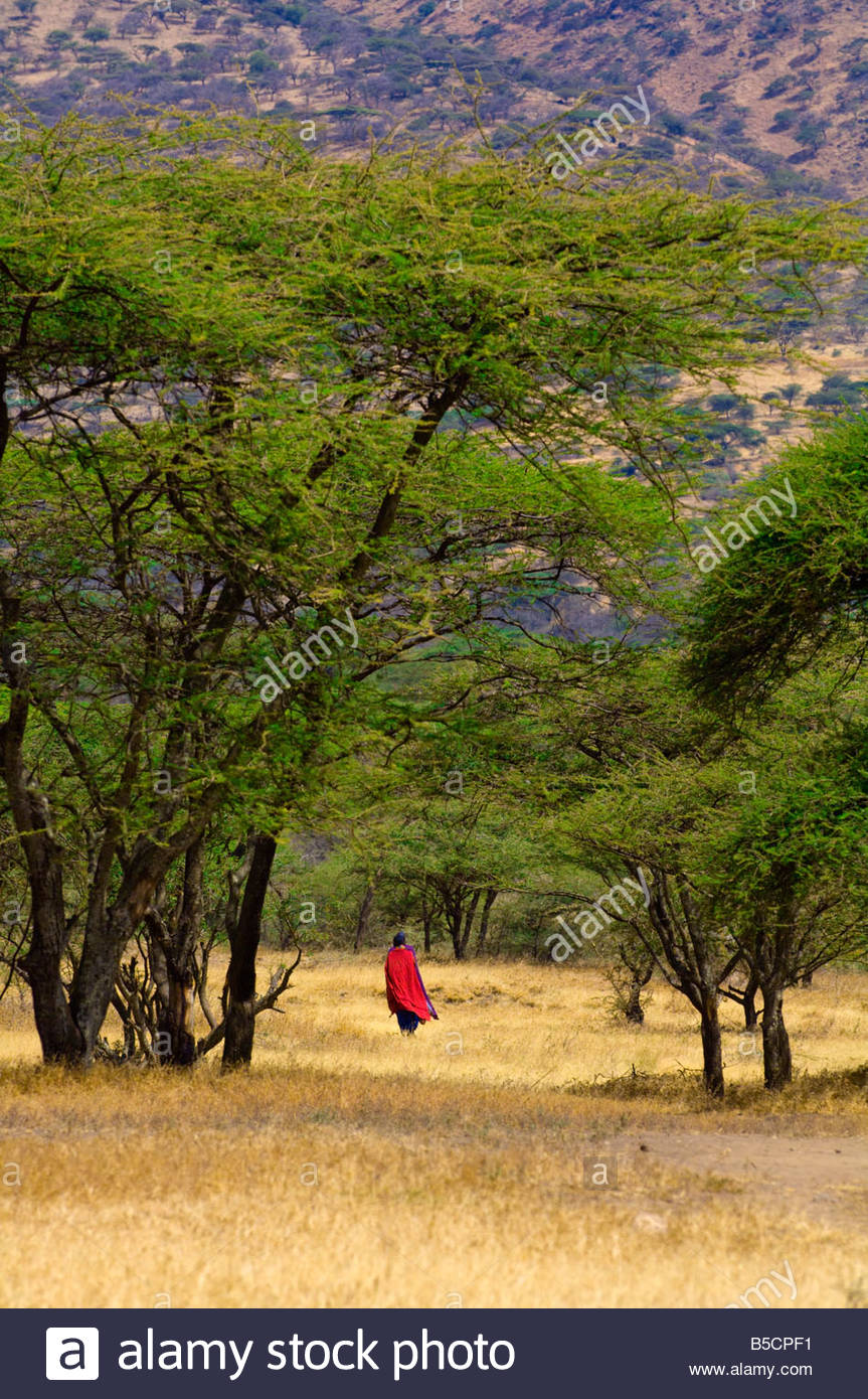 Maasai tribe men walking near the Manyatta village Ngorongoro Conservation Area Tanzania - Stock Image