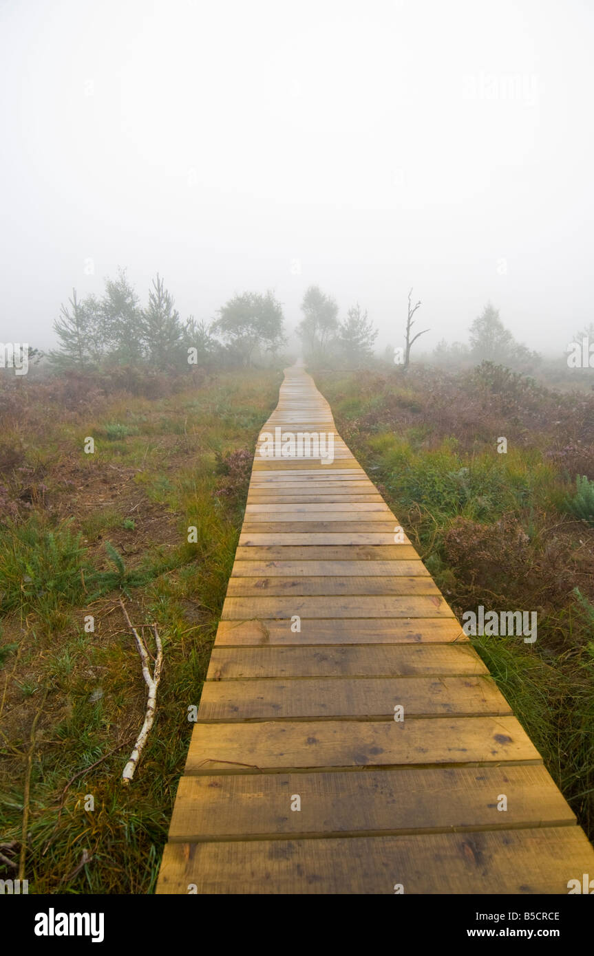 Thursley Nature Reserve in the mist Surrey UK - Stock Image