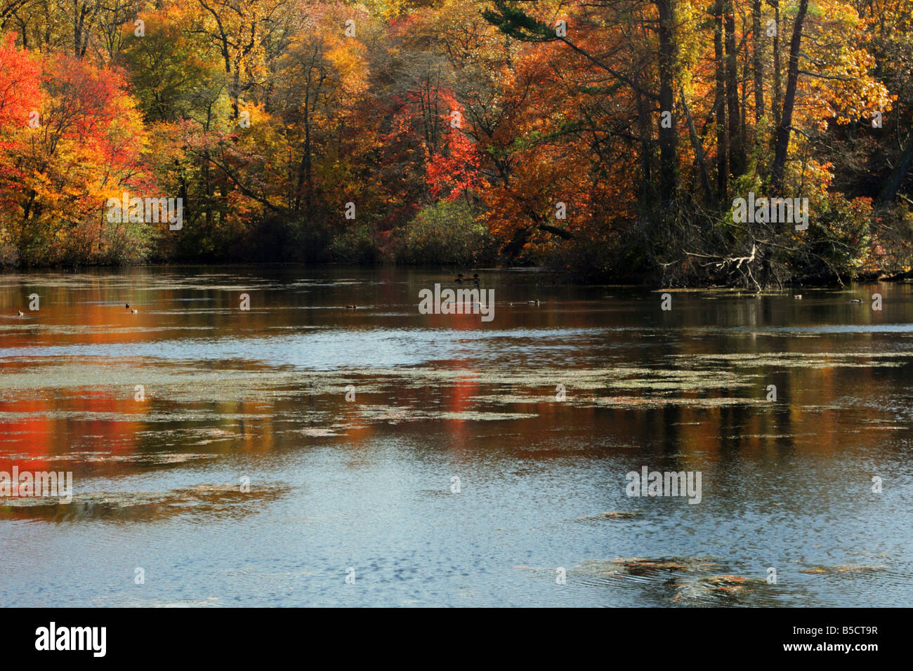Brilliant autumn forest reflections on Lower Francis Pond on Long Island New York USA - Stock Image
