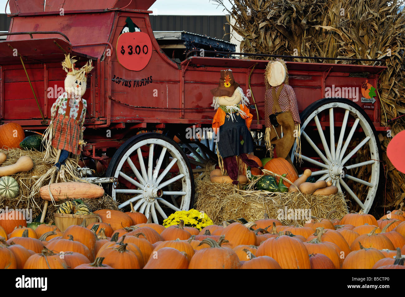 Pumpkins Old Red Wagon Corn Stalks And Decorative Scarecrows Stock