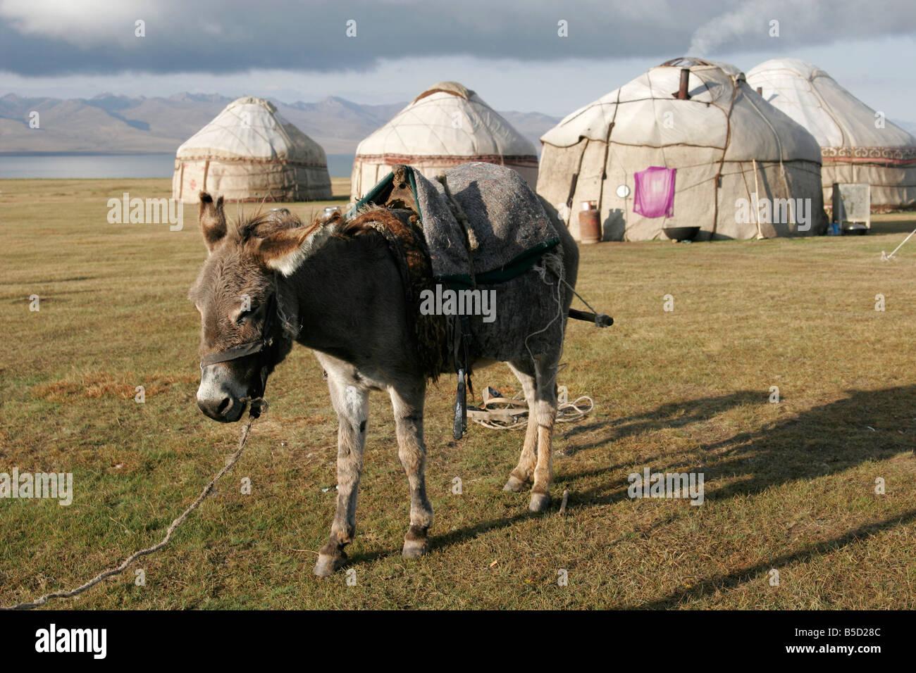 Kyrgyz yurts, lake Song-Kol, Tien Shan mountain, Kyrgyzstan, Central Asia - Stock Image
