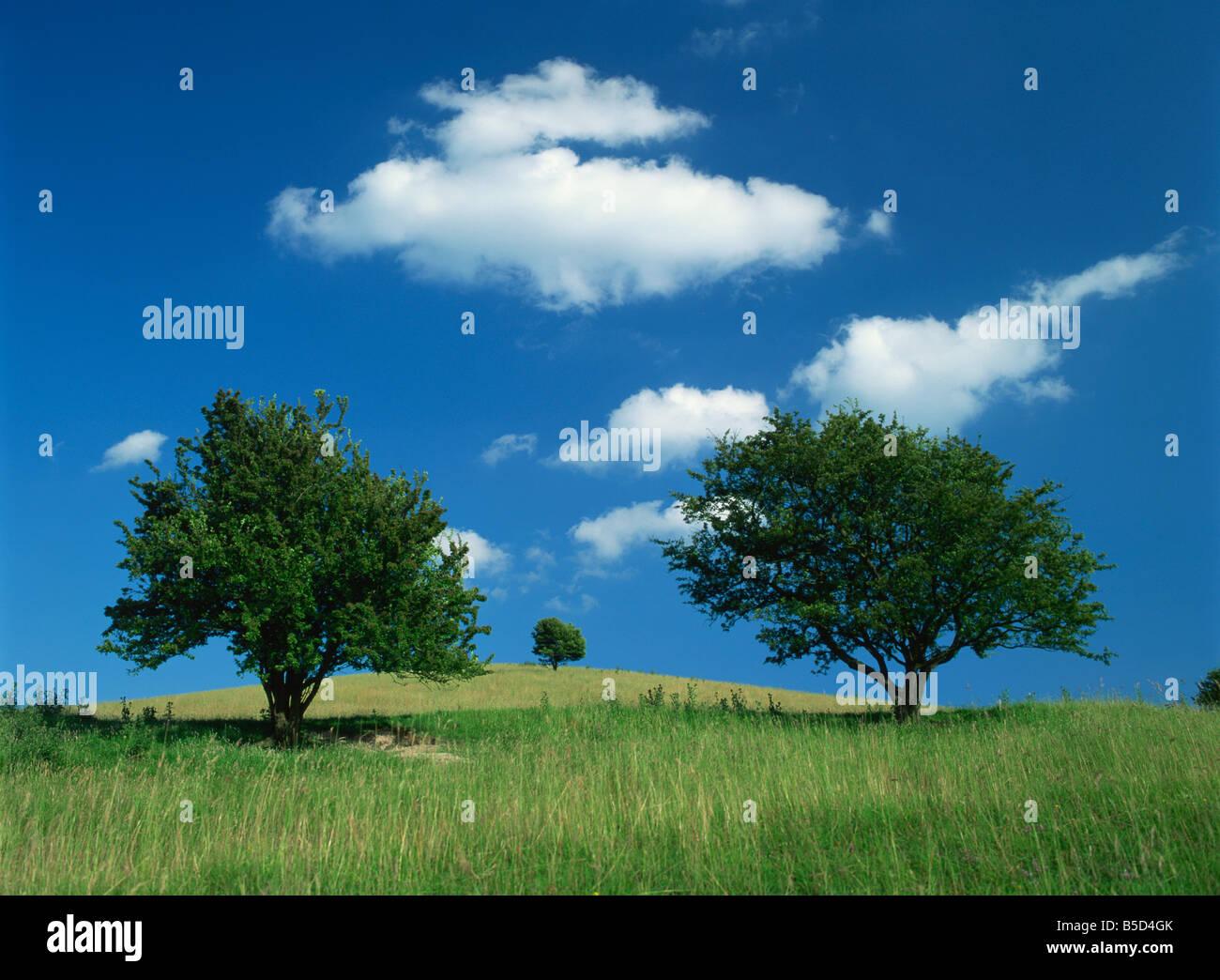 Tumuli Pitstone Hill beside the Chilterns Ridgeway path Buckinghamshire England United Kingdom Europe - Stock Image