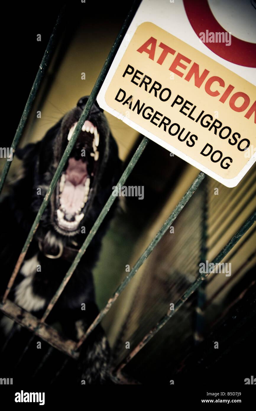 Agressive dog barking behind bar Stock Photo