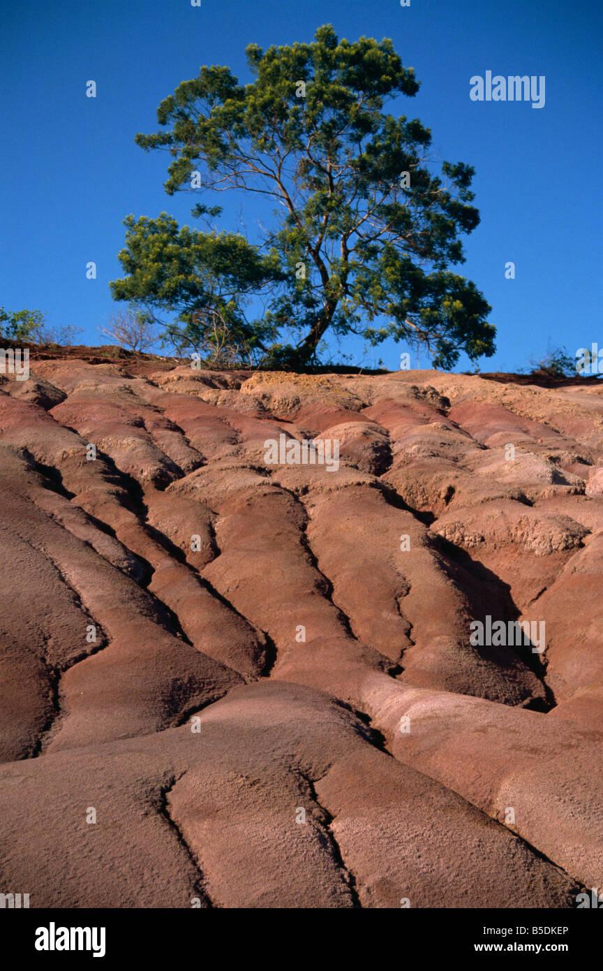 Gully erosion Kauai Hawaii United States of America Pacific North America - Stock Image