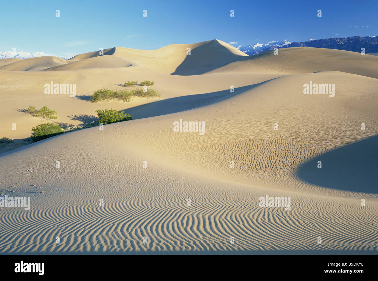 Sand dunes, Death Valley National Monument, California, USA, North America - Stock Image
