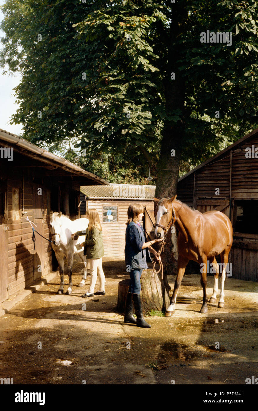 Frith Manor Livery Stables England United Kingdom Europe - Stock Image