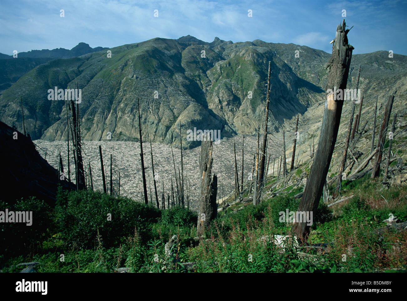 Trees flattened by eruption, and dead trees on Spirit Lake, Mount St. Helens National Volcanic Monument, Washington - Stock Image