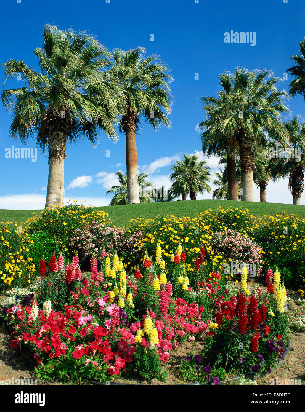 Petunias And Antirrhinum Flowers With Palm Trees In The Background