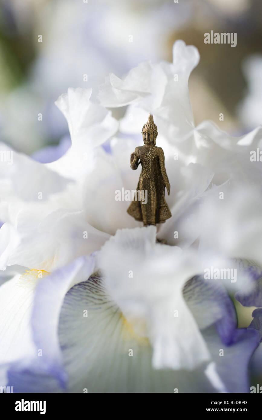 Miniature Buddha figurine standing in center of iris - Stock Image