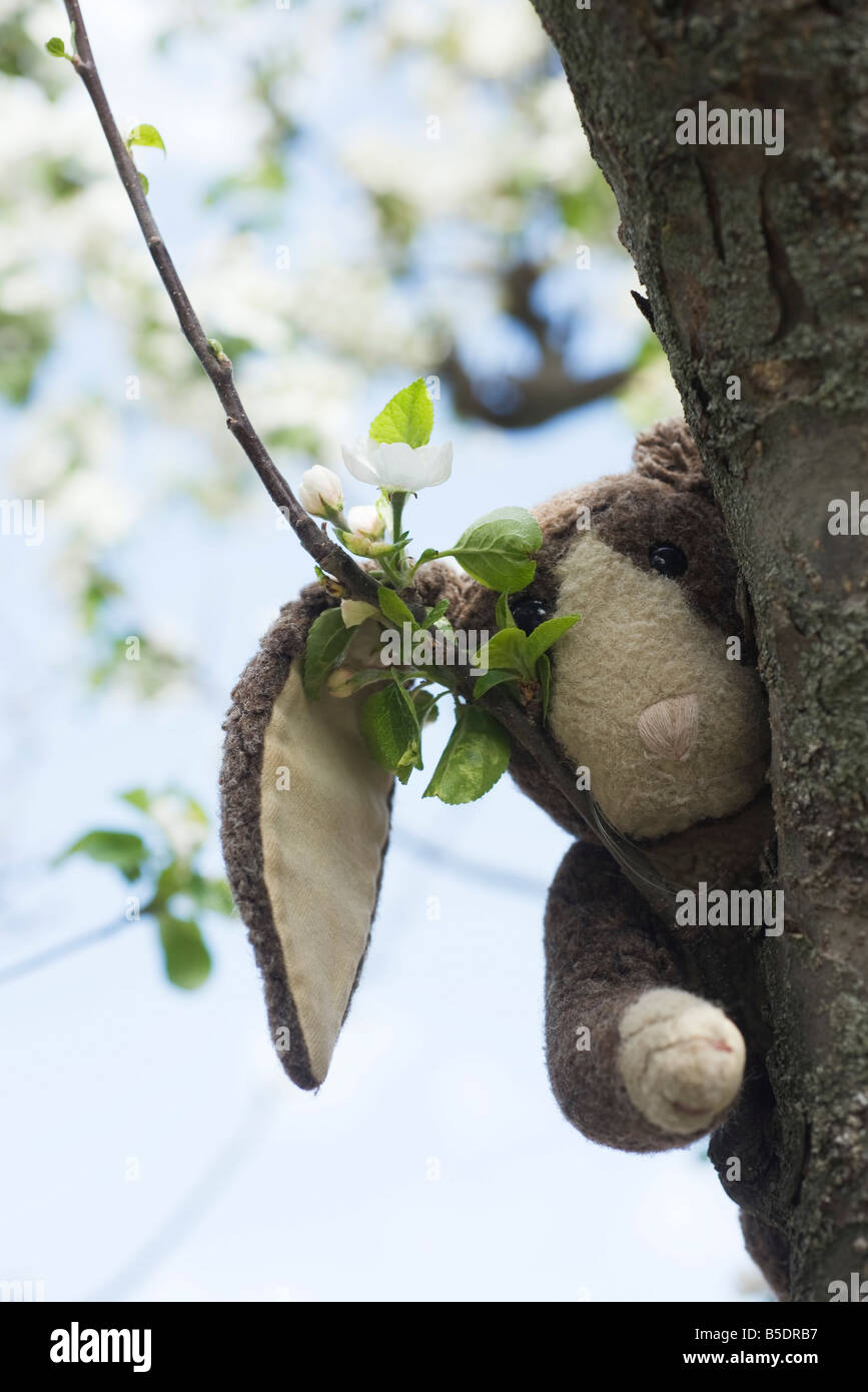Stuffed rabbit in tree, peeking at camera - Stock Image