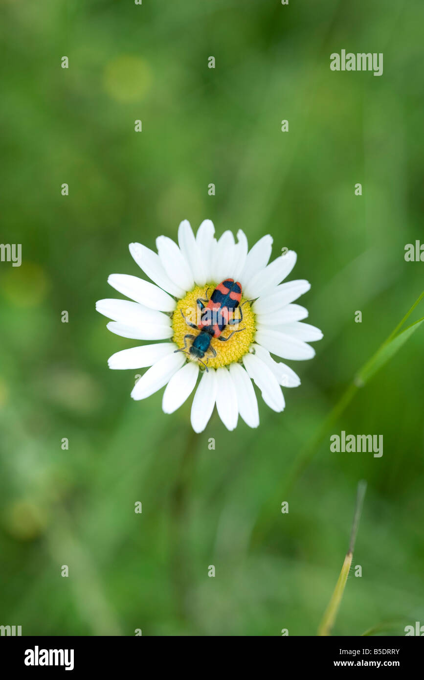 Colorful insect on top of flower - Stock Image