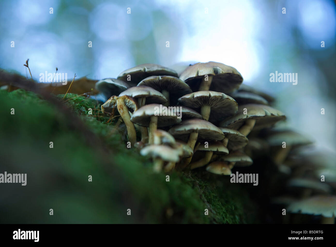 Mushrooms on the ground, low angle view - Stock Image