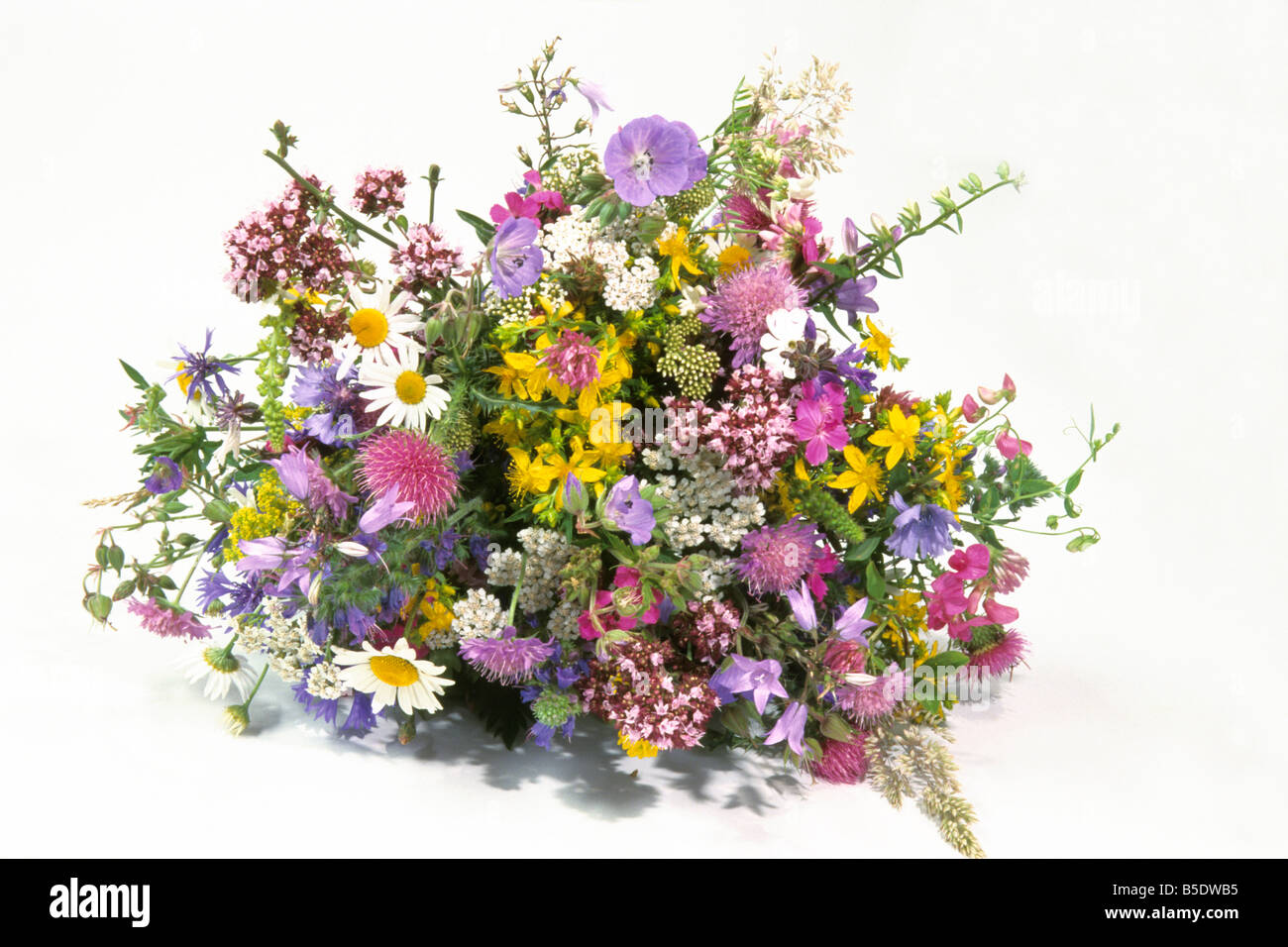 Bouquet wild flowers studio picture stock photos bouquet wild bouquet of wild flowers studio picture stock image izmirmasajfo
