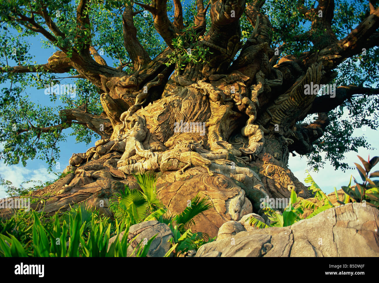 The Tree of Life, Animal Kingdom, Disneyworld, Orlando, Florida, USA, North America - Stock Image