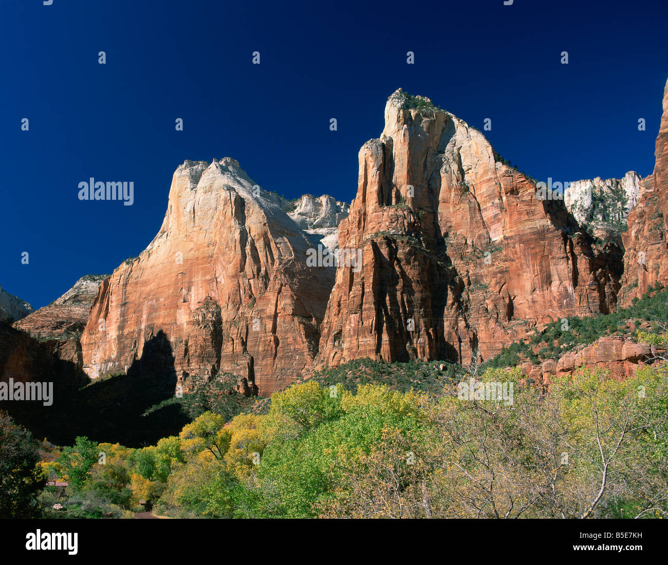 Trees in golden fall colours below Abraham and Isaac peaks in the Court of the Patriarchs in the Zion National Park - Stock Image