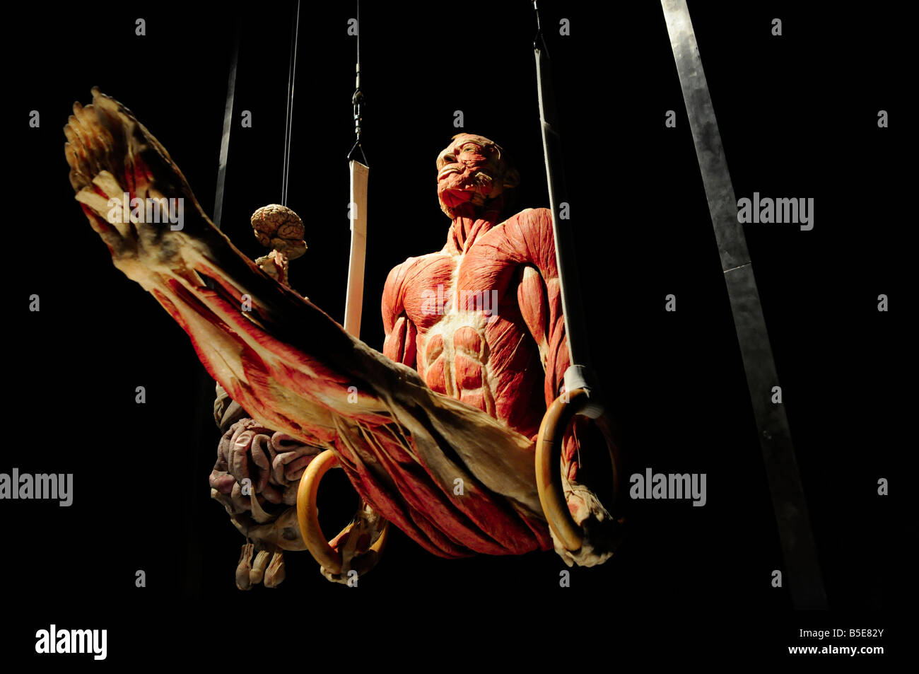 Show Body Worlds Stock Photos Show Body Worlds Stock Images Alamy
