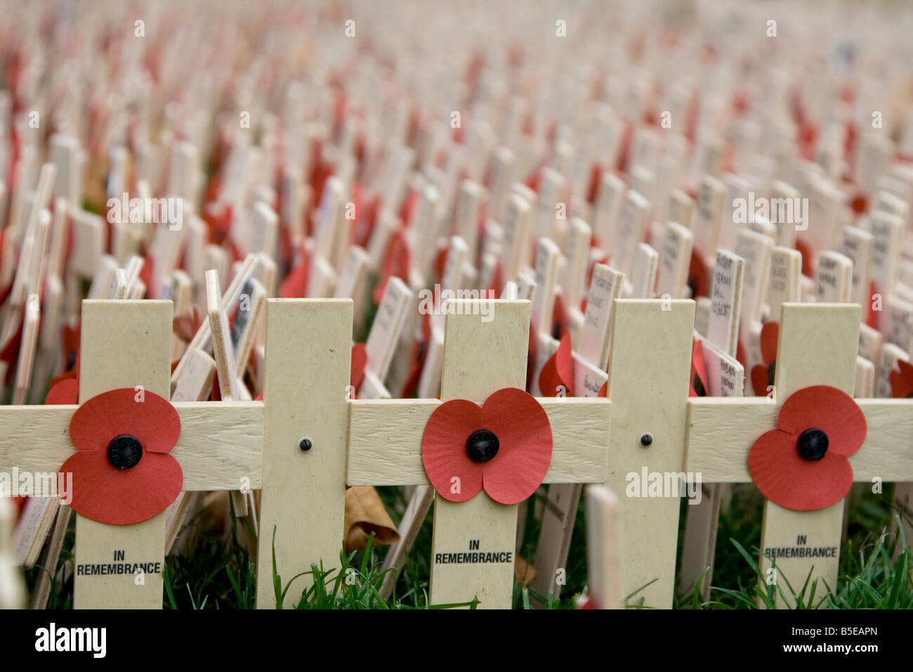 Poppies and crosses outside Westminster Abbey on Armistice Day (Remembrance Day) 2007 - Stock Image