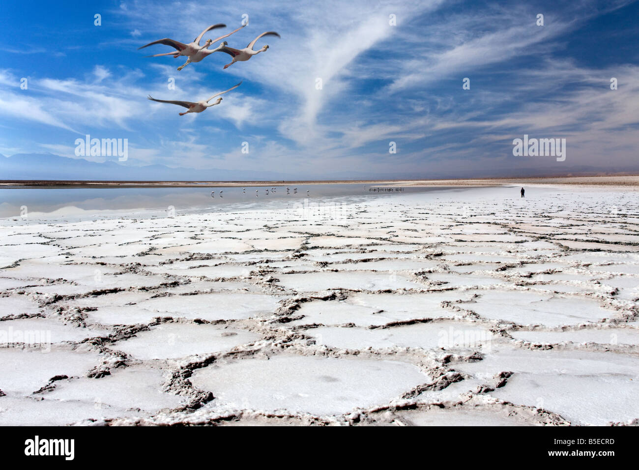 Salt Bed High Resolution Stock Photography And Images Alamy