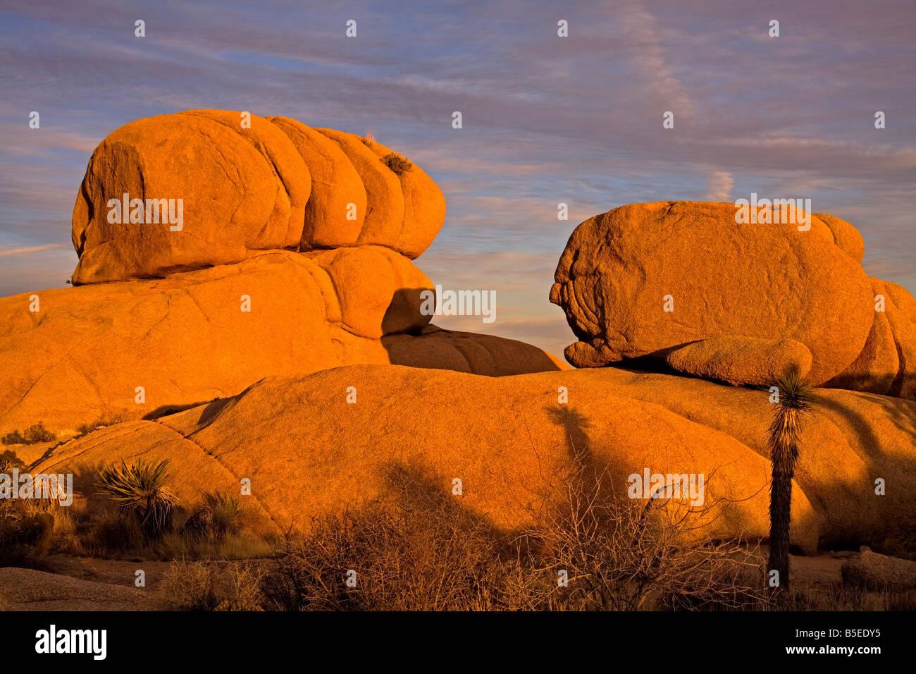 Jumbo Rocks area, Joshua Tree National Park, California, USA, North America - Stock Image