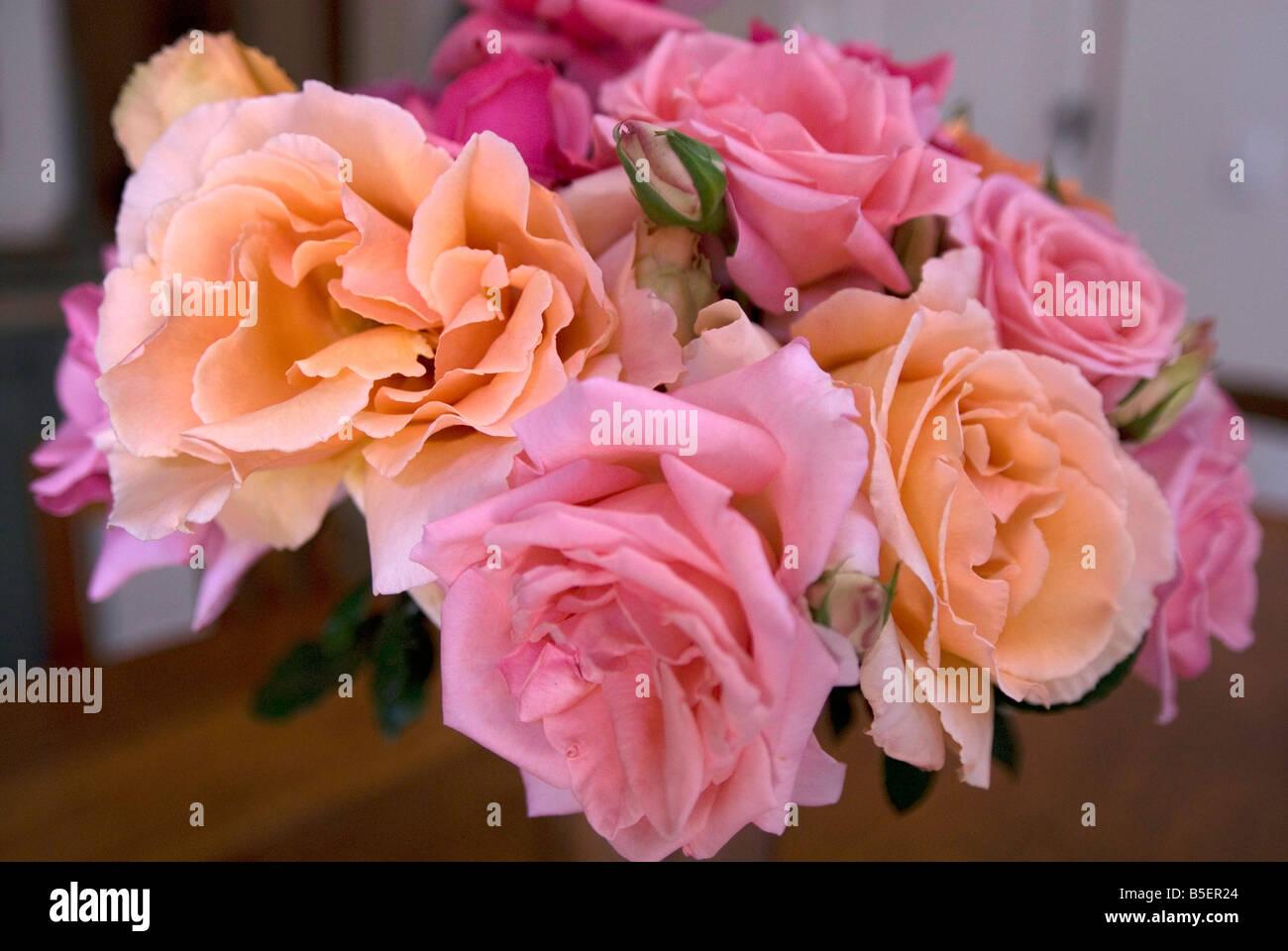 Red White Yellow Pink Orange Roses Stock Photos Red White Yellow