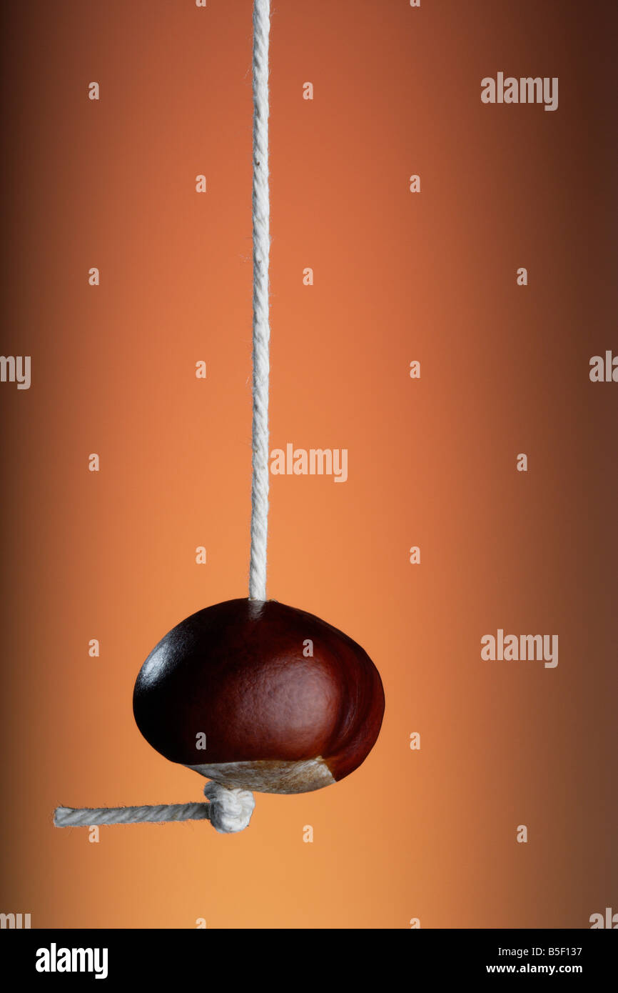 A Horse Chestnut Conker on a string Stock Photo