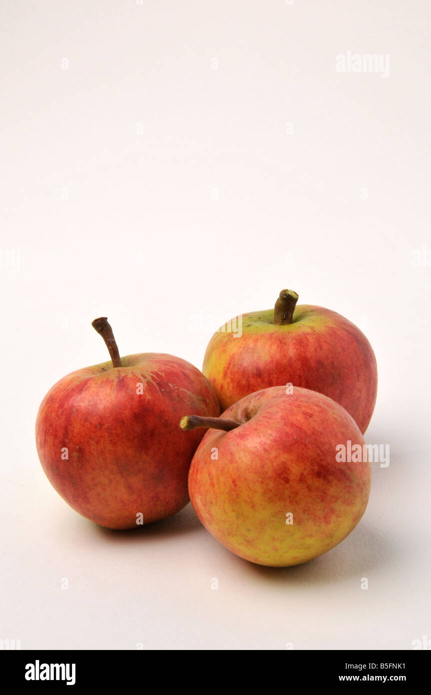 three russet english apples fruit red crisp juicy garden growing autumn eating health food vitamins red white background - Stock Image