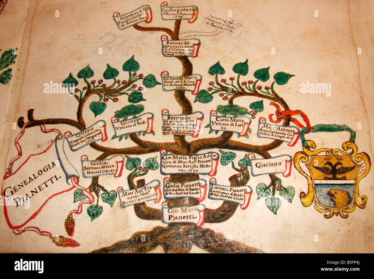 In the famous historic library in Jesi,Le Marche,Italy, the family tree of the Pianetti family of the city - Stock Image