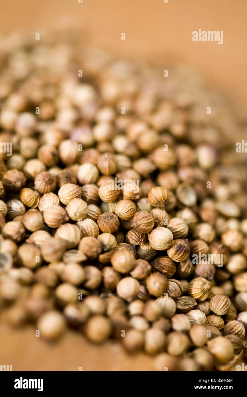 Coriander Seeds - Stock Image
