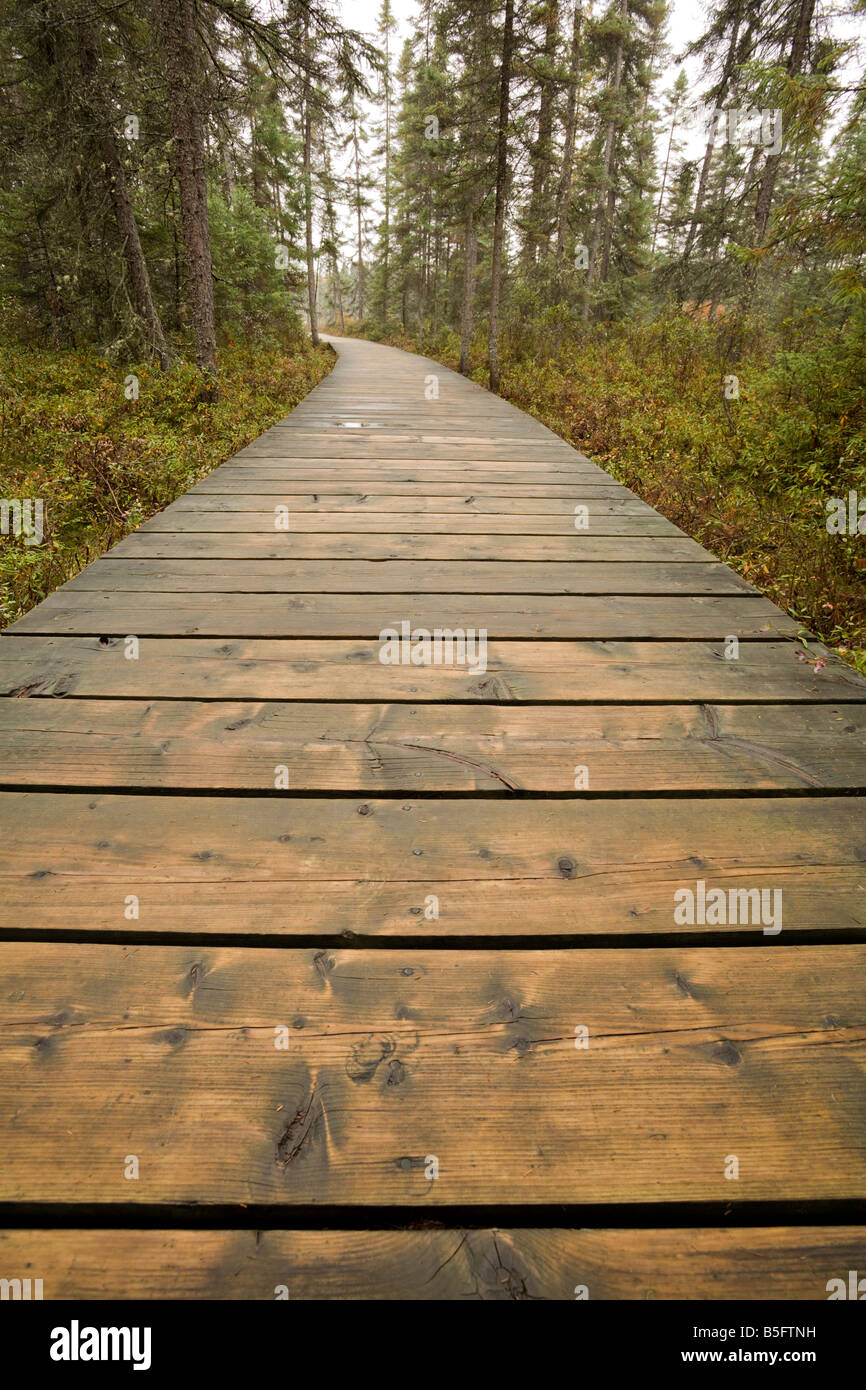 The Boardwalk along the Spruce Bog Trail, Algonquin Provincial Park, Ontario, Canada - Stock Image