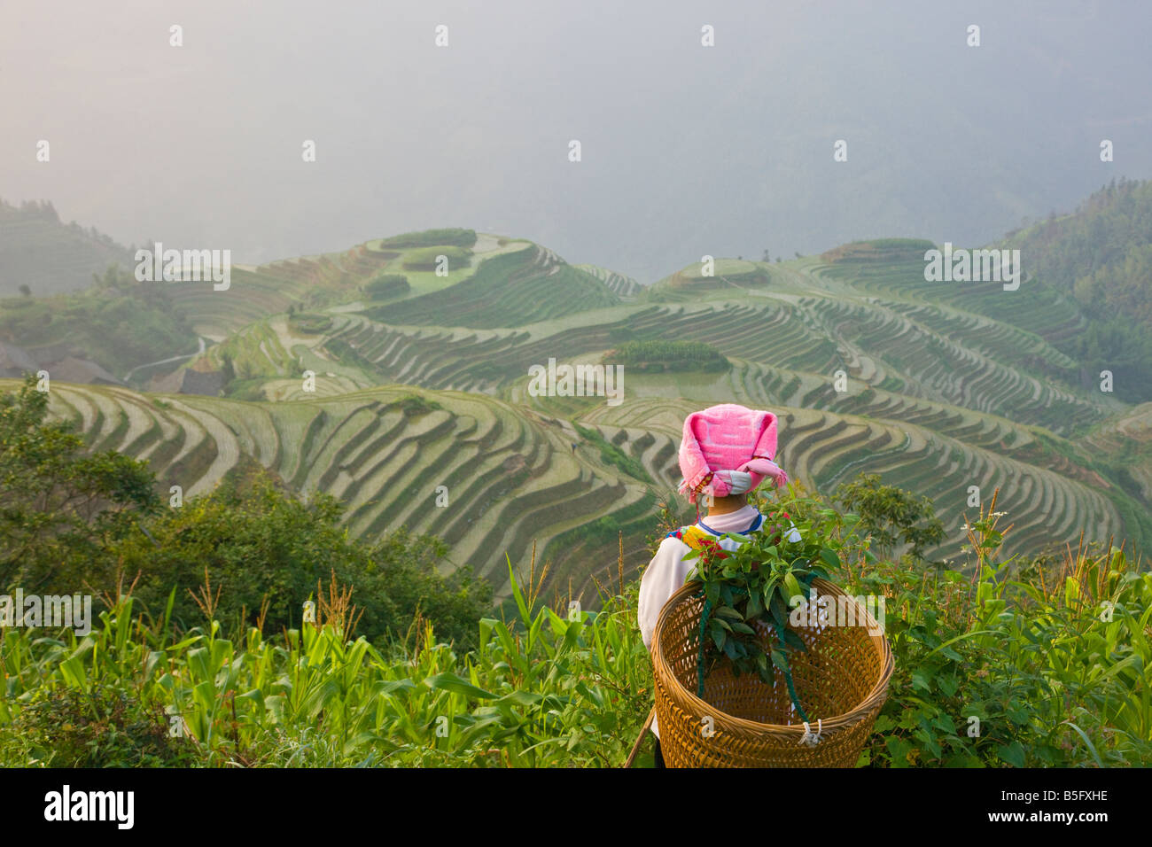Zhuang girl carrying basket with rice terraces Longsheng Guangxi China - Stock Image