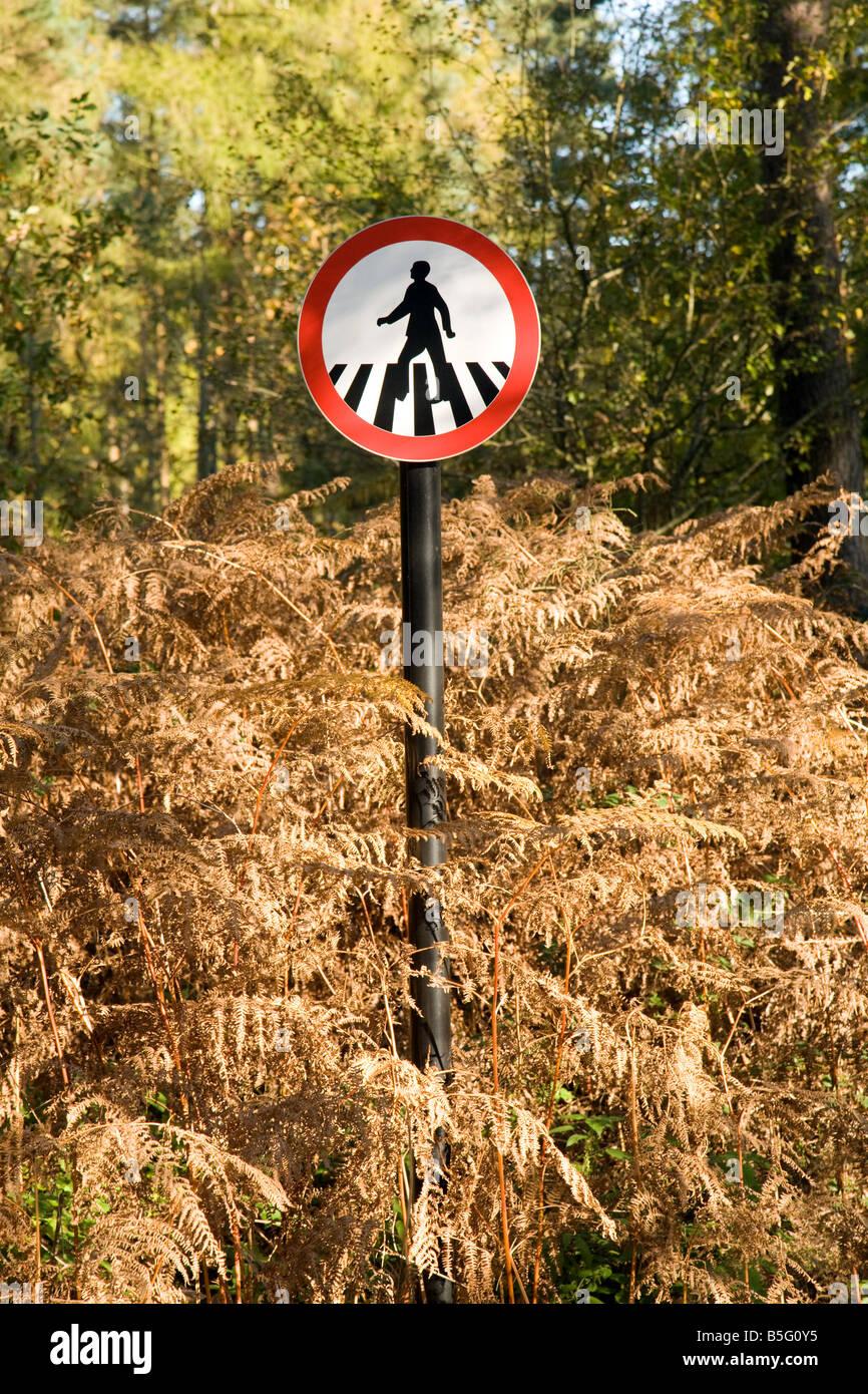 Pedestrian Crossing sign in overgrown woodland - Stock Image